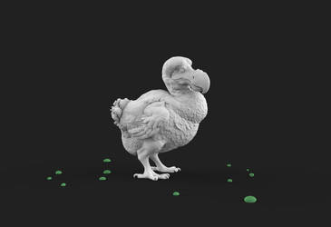 Dodo by taboada