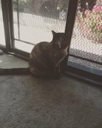 Sitting by the Door by heartstuck