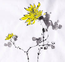 Chrysanthemum Flower by HGManiac15