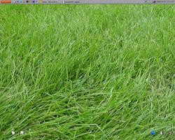 Grassy Desktop by digitaldecay