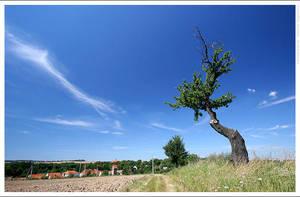 Curved tree by mjagiellicz