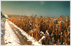 Its winter now by mjagiellicz