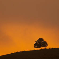 Just a lonely tree by mjagiellicz