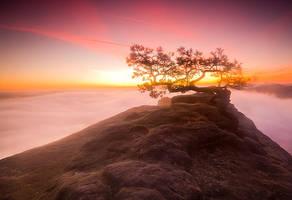 Magic tree 2 by mjagiellicz