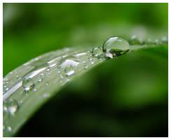 Dew by mjagiellicz