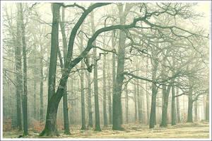 Misty forest by mjagiellicz