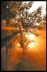 Magic tree 3 by mjagiellicz