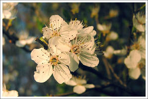 Just flower 2 by mjagiellicz