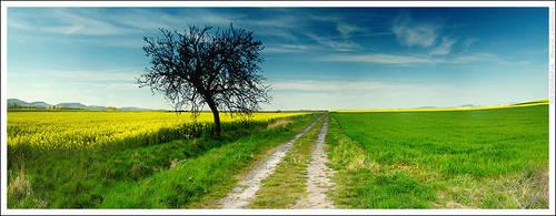 Just landscape by mjagiellicz