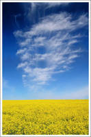 Yellow and blue by mjagiellicz