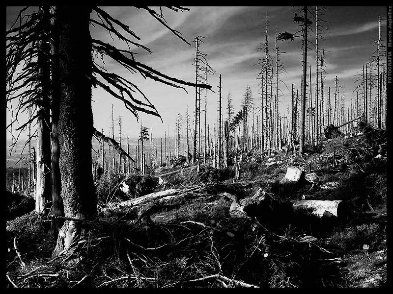 Forest of death by mjagiellicz