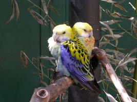 Birds by vaguelyclear