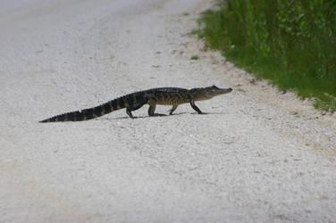 Alligator Walking 4. by Kaiju-Brawler911