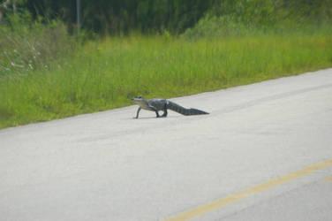 Why did the Gator cross the Road? by Kaiju-Brawler911