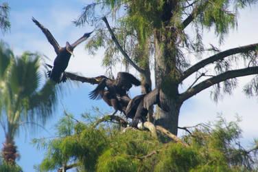 Four Cormorants with Parent in Flight. by Kaiju-Brawler911