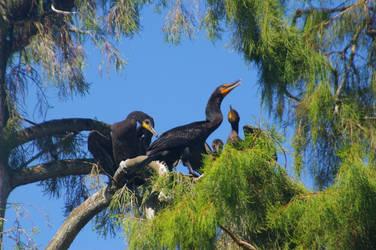 Four Cormorants 2. by Kaiju-Brawler911