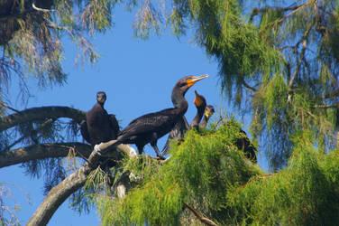 Four Cormorants 3. by Kaiju-Brawler911