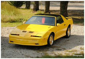 A Yellow 1985 Pontiac Trans Am by TheMan268
