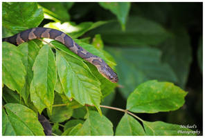 A Small Water Snake by TheMan268