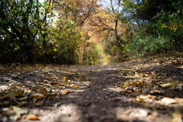 Fall Wood by advdiaboli