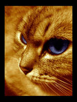 Deep Feline Thoughts by Jpp