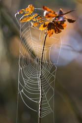 Dewy web by Sara-Roth