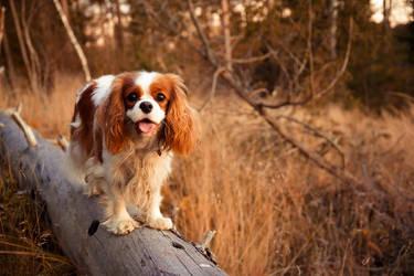 Log dog by Sara-Roth