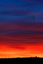 Sunset flight by Sara-Roth