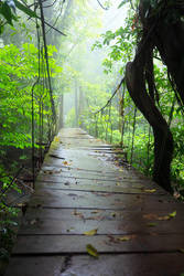 Bridge to the unknown by Sara-Roth