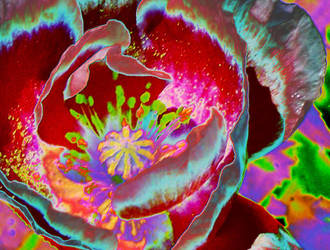 Poppy Sol 1 by The-Fattness