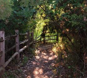 Sunlit Path by snakelady