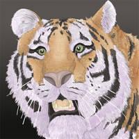 Tiger Tiger burning bright by Davuu