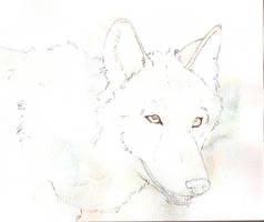 Wolf sketch by Davuu