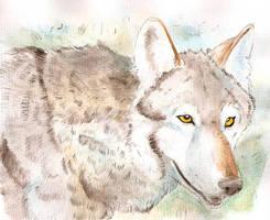 wolf coloured by Davuu