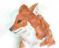 Dhole Watercolour by Davuu