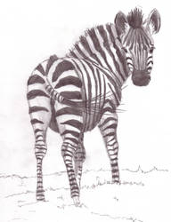 Little Zebra by Davuu