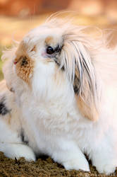 Just a fluffy bunny by Piruquitas