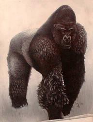 Male silverback gorilla by snakehands