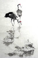 Red-crowned cranes by ninedocs