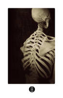 Skeleton Study by bradwright