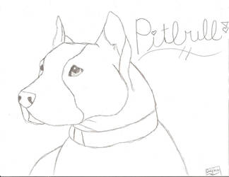 PitBull by DeathSpell1995