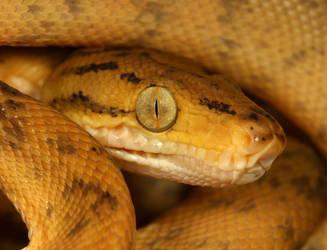 snake macro by macrojunkie