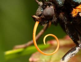 moth series_4 by macrojunkie