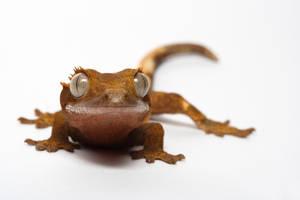 my pet gecko 1 by macrojunkie