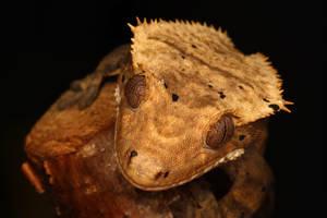 gecko summer 1009 by macrojunkie