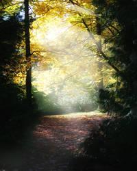 Woods by Darjeell