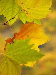 Leaves in Autumn by Darjeell