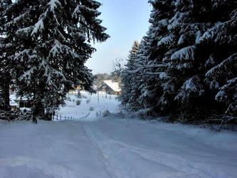 Winter Path by Darjeell