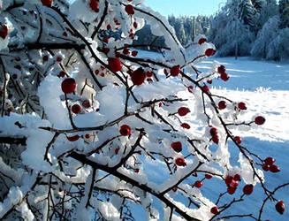 Winter Berries by Darjeell