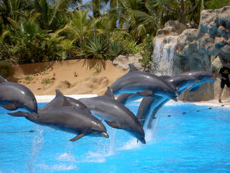 Dolphins of Loro Parque by KissKissKillKill